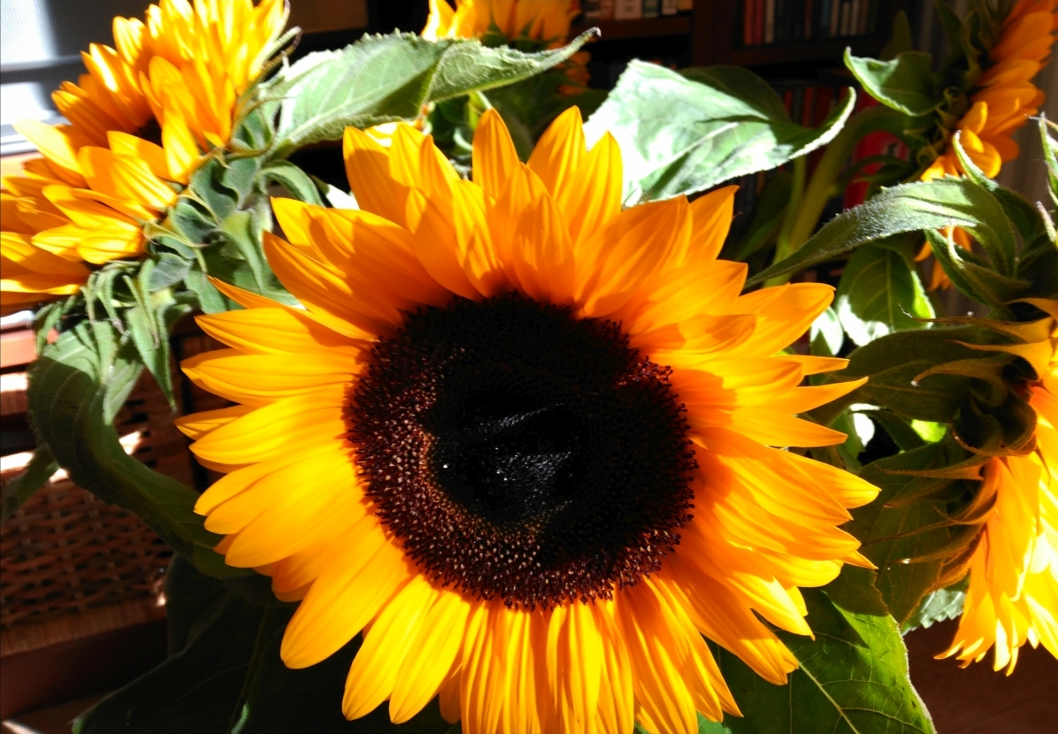 In welcher Welt willst Du leben - Lernraum - Sonnenblume