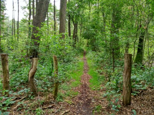 Fantasiereise Sommerwald